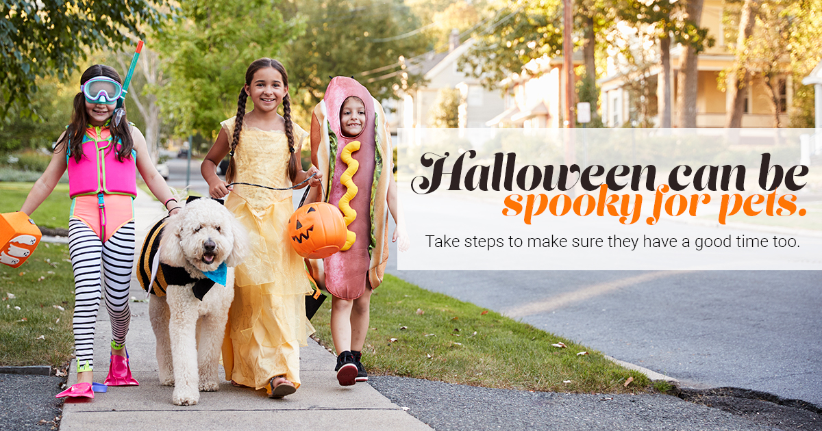 Halloween can be spooky for pets. Take steps to make sure they have a good time too.